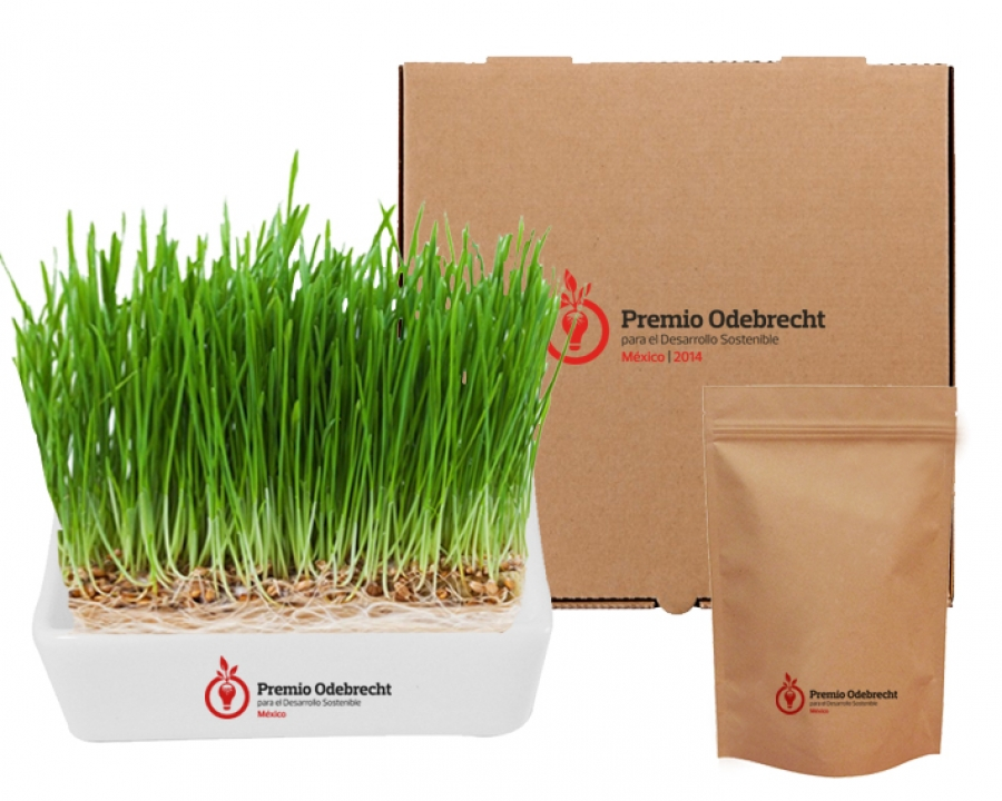 Set WheatGrass Lux - NAT1041